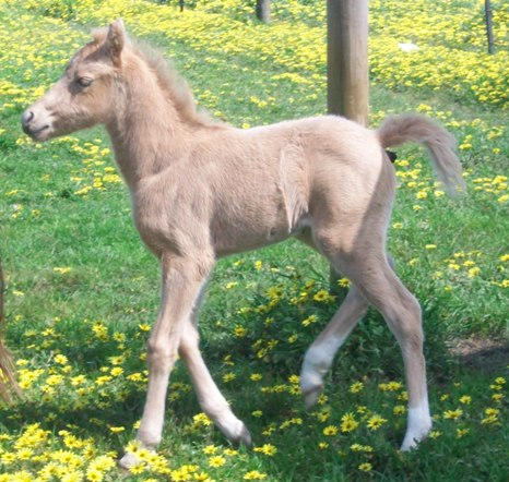 health and wellbeing of the newborn foal